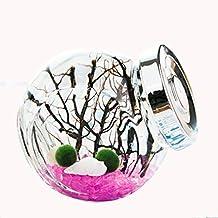 OMEM for kids algae moss balls seed Glass jar Aquarium terrarium Kit (Pink)