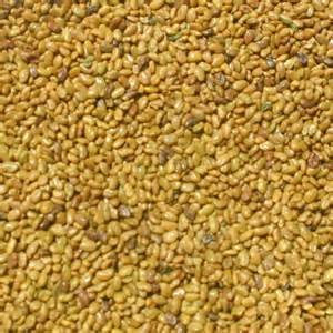Alfalfa Seed 1lb Bag (COATED) by FARMERS DAUGHTERS SEEDS (Image #1)