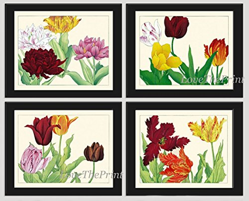 Tulips Art Print Set of 4 Antique Japanese Woodblock Beautiful Botanical White Burgundy Yellow Red Pink Flowers Spring Garden Nature Home Room Wall Decor Unframed - Four Seasons Woodblock