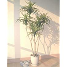 4.5ft Yucca Palm, Artificial Tree (WITHOUT POT)