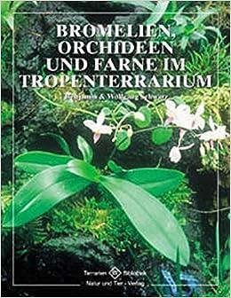 Bromelien Orchideen Und Farne Im Tropenterrarium Terrarien