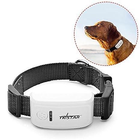 DWSS Monitor GPS para perros y gatos, rastreador de localización de mascotas de alta precisión, buscador de mascotas: Amazon.es: Productos para mascotas