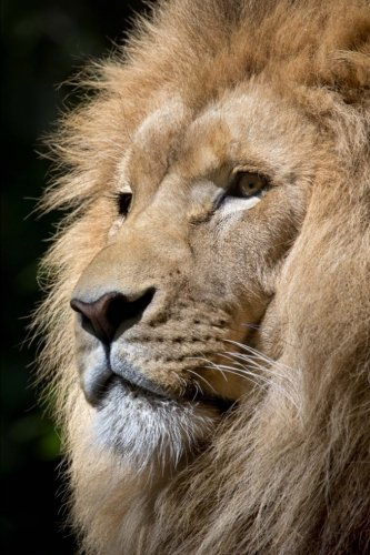 """Read Online Lion in Thought Journal: (Lion Journal, Lion Mane, Notebook, Diary, Log Book, School Composition Book, 6 x 9"""", Medium, Ruled) (Animals) (Volume 16) pdf epub"""