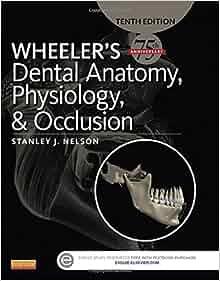 Wheelers dental anatomy