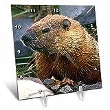 Wild animals – Groundhog – 6×6 Desk Clock (dc_690_1) For Sale