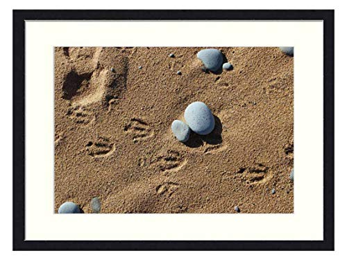 OiArt Art Print Wall Picture (20x14 inch) - Penguins Footprints in The Sand Animal Tracks Beach (Penguin Footprint)