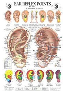 Ear Reflex Points Chart (Chinese Edition)