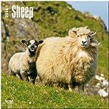 Sheep Calendar, , 1465012583