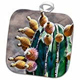 3dRose Danita Delimont - Cacti - Pachycereus pringlei, Cardon cactus, Baja, Mexico - SA13 MWI0044 - Mark Williford - 8x8 Potholder (phl_141611_1)