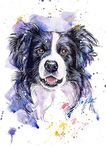 Border Collie Fine Art Print of Original Watercolor Painting, Pet Themed Party Nursery Home Wall Decor, Gift for Dog Mom, Dad, Parent; Rainbow Bridge Pet Loss Sympathy Memorial Housewarming Gift