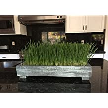 Complete Organic Wheatgrass kit with Gorgeous Multi Use Cedar Planter, Organic Soil, Seeds and Instructions (Coastal Turquoise)