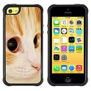 Suave TPU Caso Carcasa de Caucho Funda para Apple Iphone 5C / Somali Orange American Shorthair Cat / STRONG