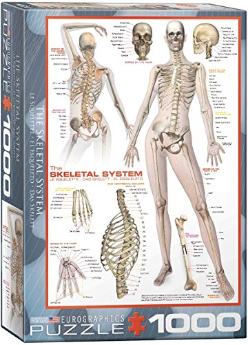 EuroGraphics Skeletal System (Human Body) 1000 Piece Puzzle