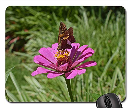 Mouse Pad - Silver-Spotted Skipper On Zinnia Butterfly Insect ()