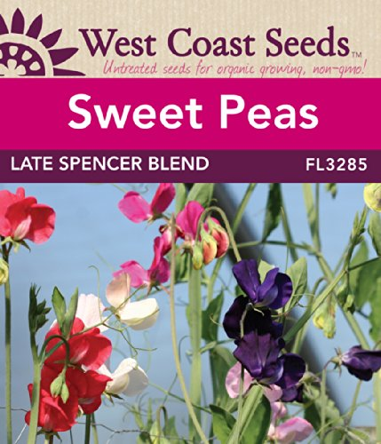sweet-pea-seeds-late-spencer-blend-approx-60-seeds