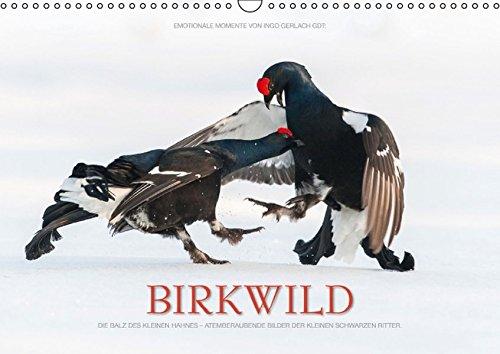 emotionale-momente-birkwild-wandkalender-2016
