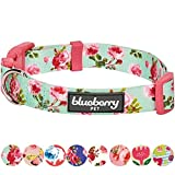 """Blueberry Pet 8 Patterns Spring Scent Inspired Floral Rose Print Turquoise Dog Collar, Medium, Neck 14.5""""-20"""", Adjustable Collars for Dogs"""