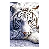 Posters: Big Cats Poster - White Tiger (36 x 24 inches)