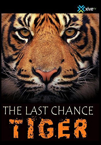 The Last Chance Tiger (with exclusive baby tiger footage)