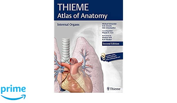 Internal Organs (THIEME Atlas of Anatomy): 9781626231665: Medicine ...