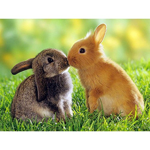 Two Bunny Love - Wildlife Animal Art Print Poster Wall Decor Home Decor(24x16inches)
