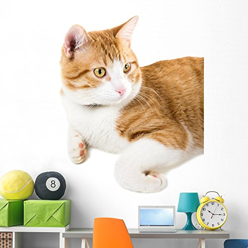 Portrait Lying Ginger Cat Wall Mural by Wallmonkeys Peel and Stick Graphic (60 in H x 48 in W) (Lying Down Cat)