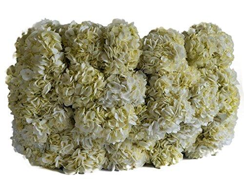 the 8 best bulk fresh flowers