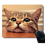 Curious Cute Cat Look at you with Eager Eyes on Table Customized Mouse Pad