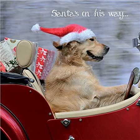 golden retriever charity christmas cards santas on his way pack of 10