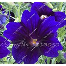 100 Pcs Rare Ghost Petunia Flower Seeds in Bonsai Indoor Flower Seeds for Home Garden Potted Plant Germination Rate of 95%
