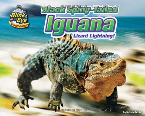Read Online Black Spiny-Tailed Iguana: Lizard Lightning! (Blink of an Eye: Superfast Animals) ebook