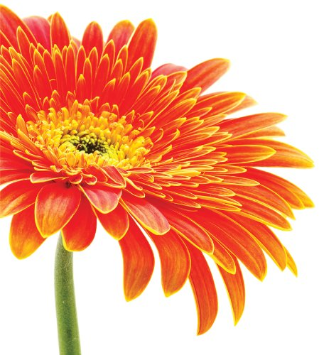 WallPops WPDP0246 34-Inch-by-39-Inch Daisy Panel Decals - Orange Flower Wallpaper