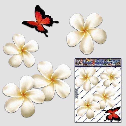 Frangipani plumeria pequeña flor blanco doble + animal de la mariposa Etiquetas engomadas del coche del paquete - ST00024WT_SML - Etiquetas engomadas de JAS
