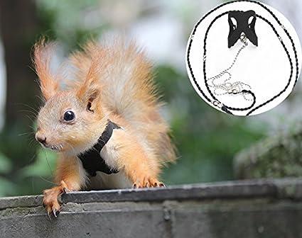 Amazon.com : Pet Squirrel Vest Harnesses Separate Anti - bite ...