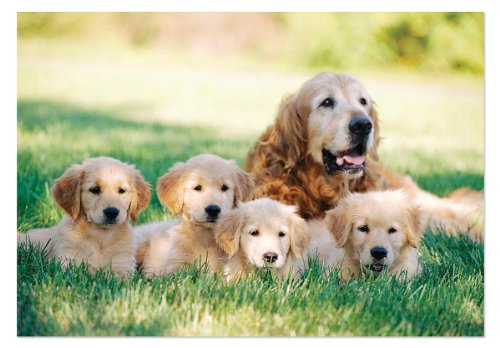 (Melissa & Doug Golden Retriever with Puppies Jigsaw Puzzle, 100-Piece )