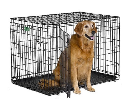 dog sitting on 42″ Double Door Folding Metal Dog Crates