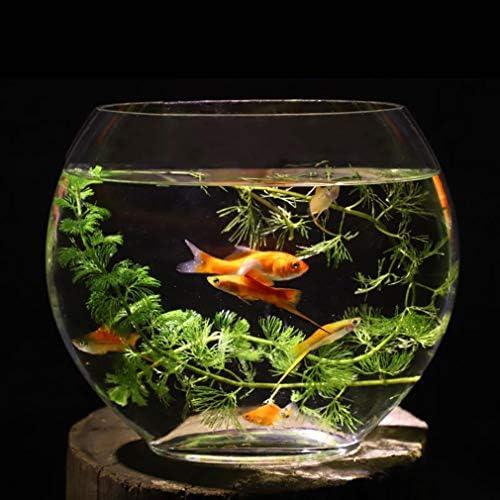 水槽平口ガラス金魚タンクオーバルウルトラホワイト透明ガラス机、オフィス、寝室用ミニ水族館,35cm