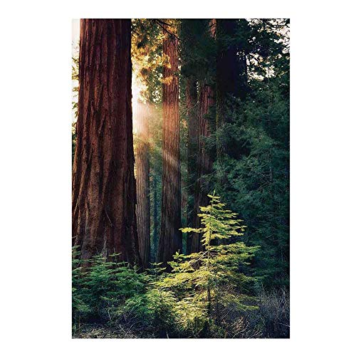 """National Parks Home Decor Stylish Backdrop,Morning Sunlight in Wilderness Yosemite Sierra Nevada Nature Art for Photography,39"""" W x 59"""" H"""