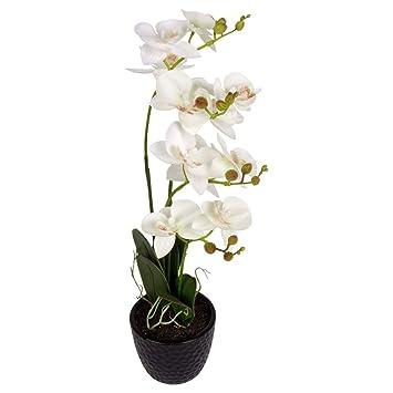 orchidee 5 rispen