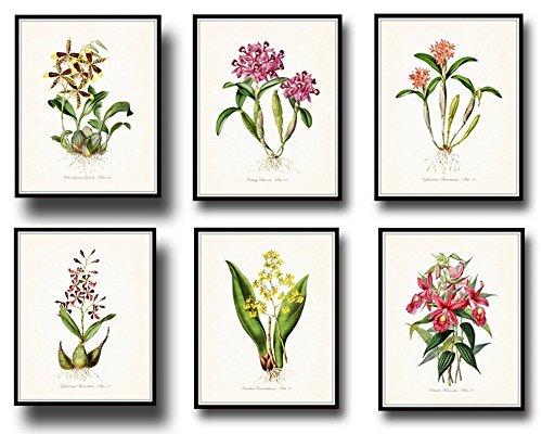 Botanical Print Set 6 Tropical Orchid Giclee Fine Art Prints - Unframed ()