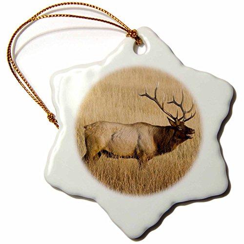 3dRose Danita Delimont - Elk - Wyoming, Yellowstone, Bull elk wildlife - US51 JWI0386 - Jamie and Judy Wild - 3 inch Snowflake Porcelain Ornament (orn_97423_1)