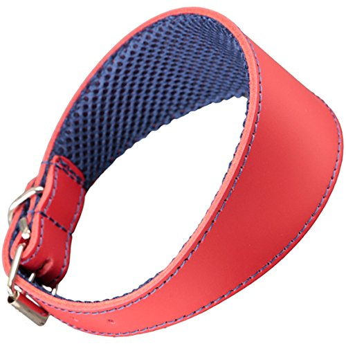 Collar Rojo y Azul Marino para Galgos