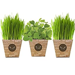 Fresh Cat Grass/ Catnip Combo Delivery- Pet Grass Whisker Greens and Whisker Nip Come grown and fresh to your Door!