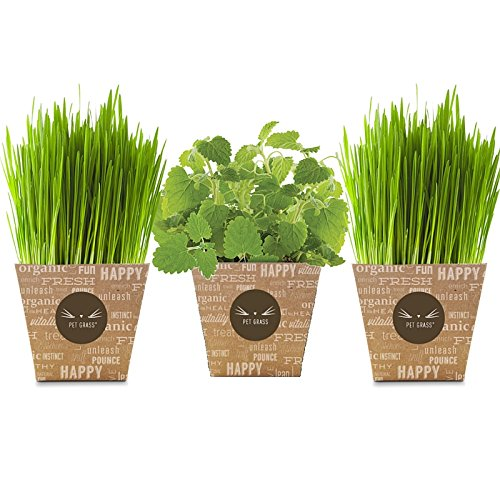 Grass Catnip Delivery Pet Whisker product image