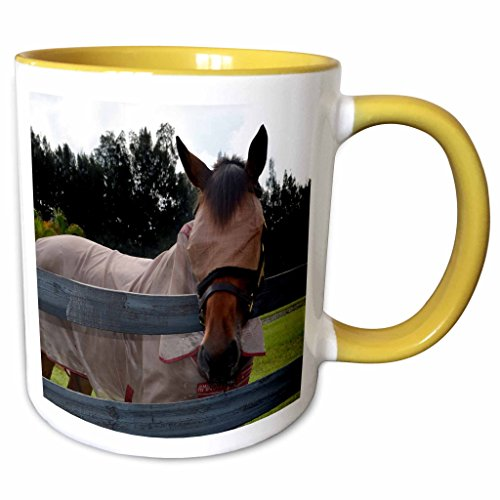 3dRose Susans Zoo Crew Animals Horse - Horse head on over fence fly mask - 15oz Two-Tone Yellow Mug (mug_162188_13)
