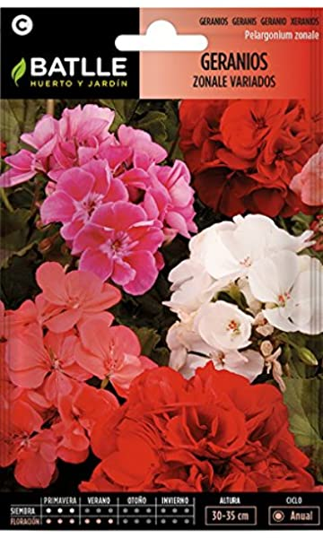 Semillas de Flores - Geranios Zonale variados - Batlle: Amazon.es: Jardín