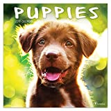 2019 Wall Calendar - 2019 Puppies Calendar, 12x12 Inch Monthly Calendar, Pets and Animals Theme, with 4-Month 2020 Bonus Spread