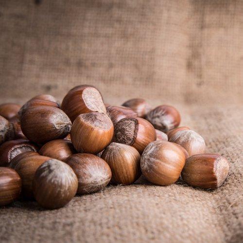 ヘーゼルナッツの苗木 2品種セット B06ZY6GWH7