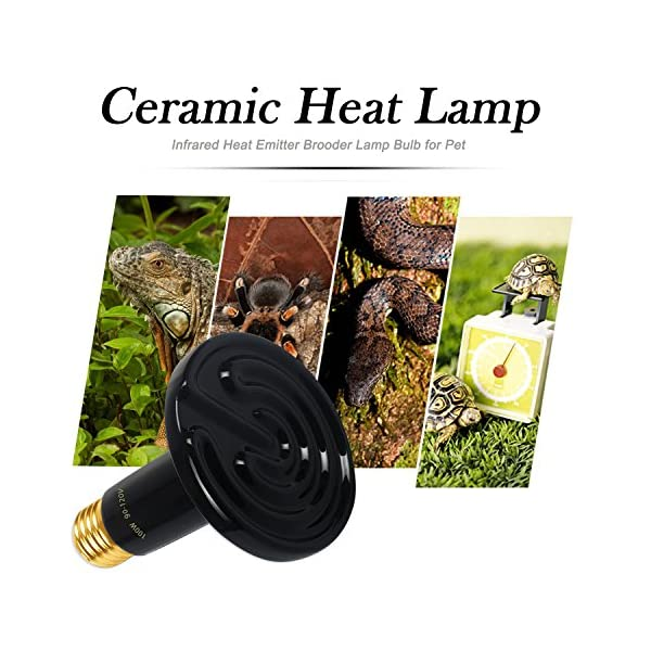 OMAYKEY 100W 2 Pack Ceramic Heat Lamp with 1-pcs Digital-Thermometer, Infrared Reptile Heat Emitter Heater Lamp Bulb for Pet Brooder Coop Chicken Lizard Turtle Snake Aquarium, No Light No Harm 4