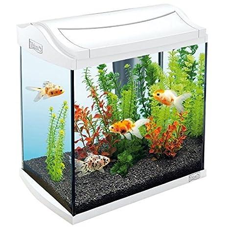 Tetra acuario aquaart 30 L, color blanco: Amazon.es: Productos para mascotas